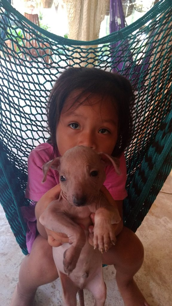 Indigenous Girl with puppy