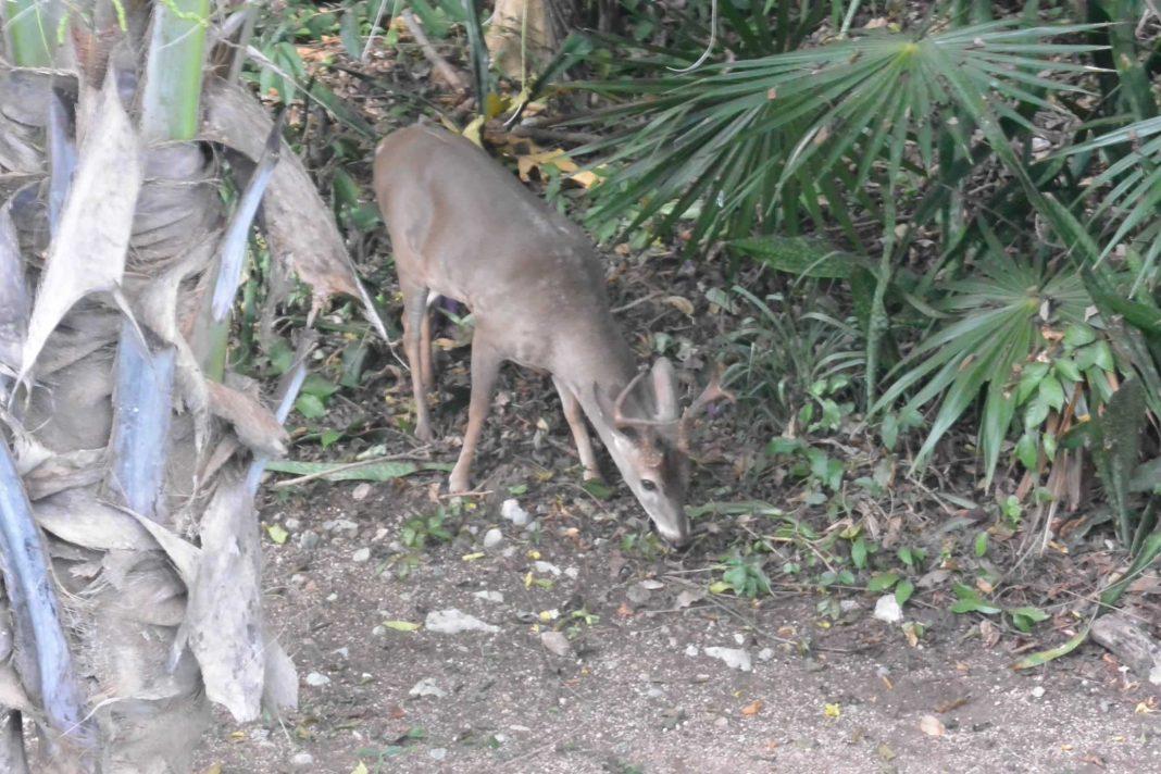 Animals Playacar