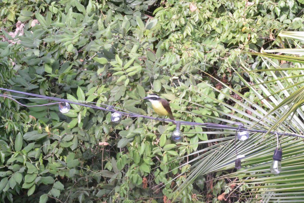 Bird Playacar